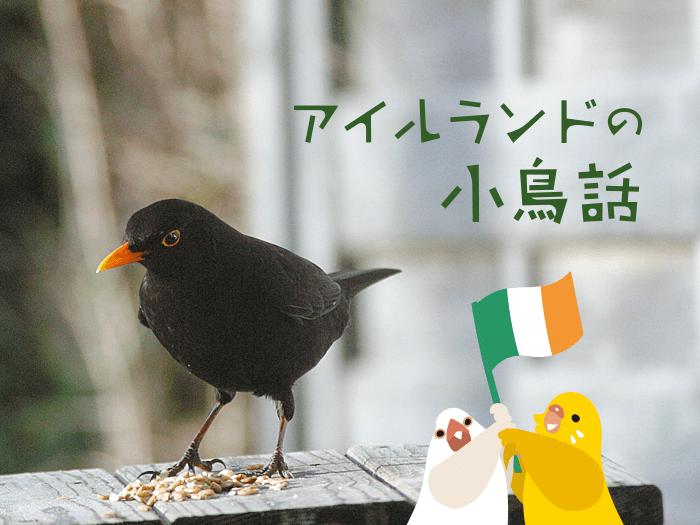 アイルランドの小鳥話